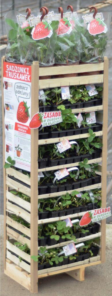 Ampeljordgubbar och Jordgubbsplantor