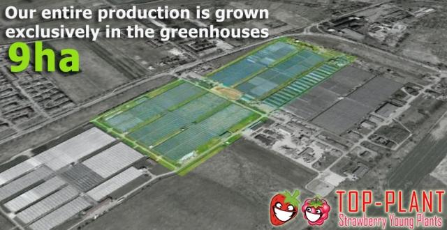Jordgubbsproducent TOP PLANT
